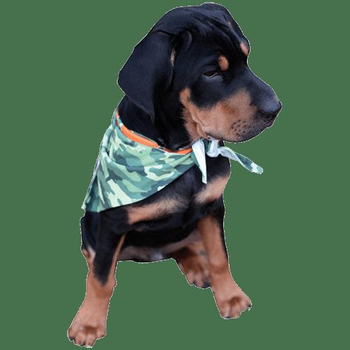 Personalized Full Color Pet Bandana 1